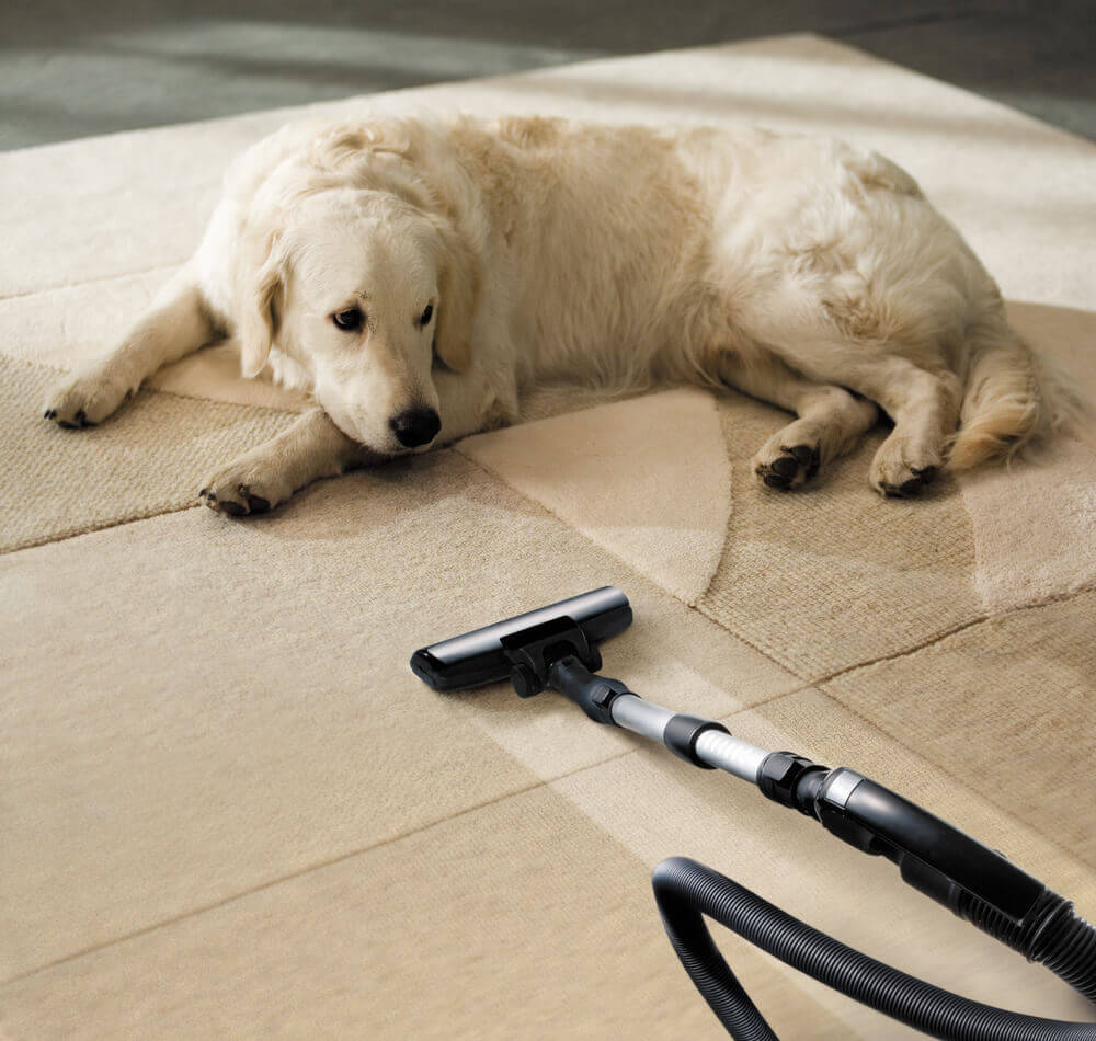 Pet Stain & Odor Removal Services Smyrna, TN, Pet Stain and Odor Removal Company, pet stain odour removal nashville, pet stain odour removal smyrna tn, carpet cleaning nashville tn, carpet cleaning smyrna tn